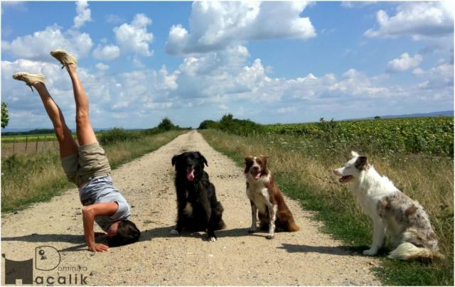 Powitanie Rumunii - początek wakacji z psem