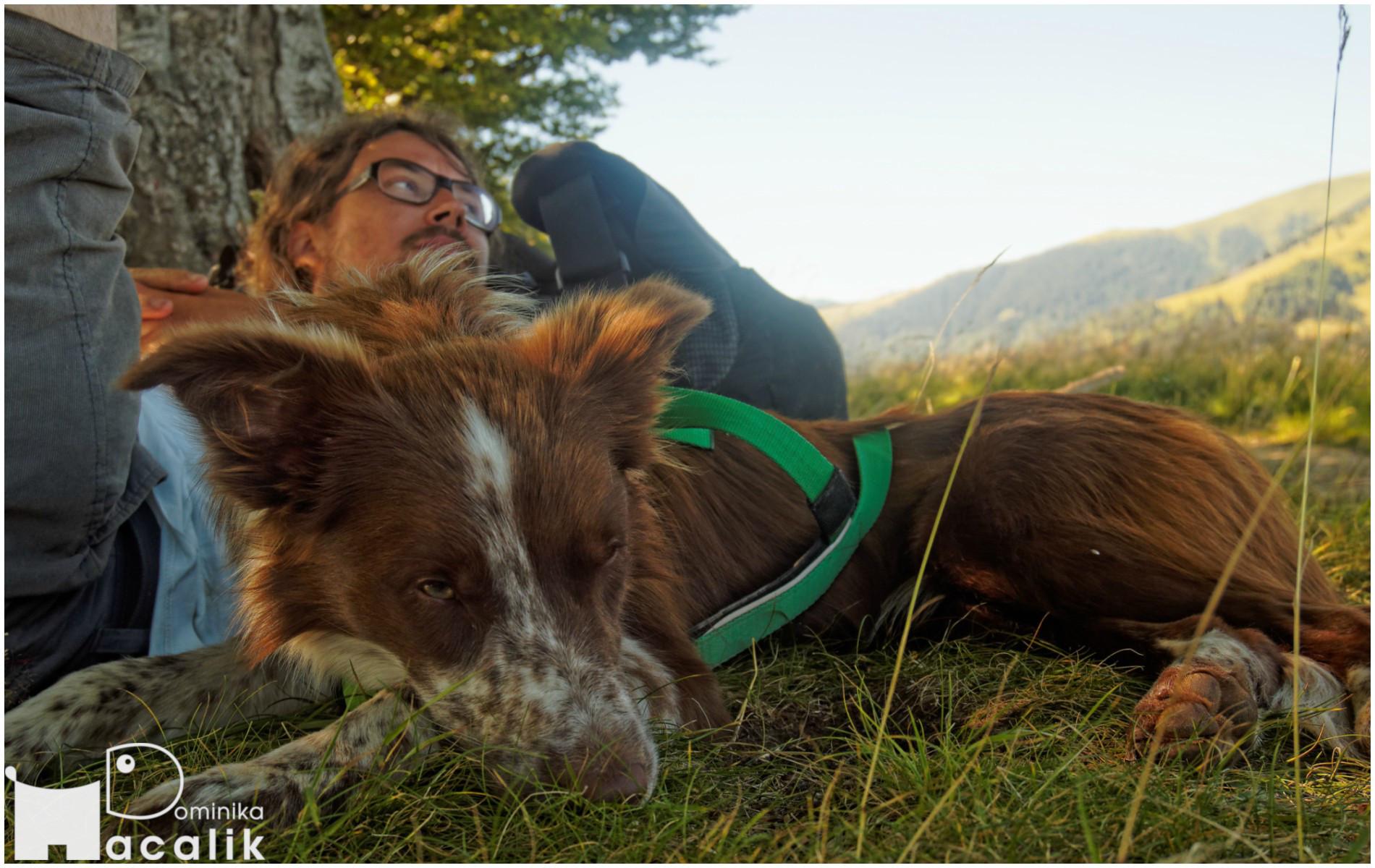 Podczas wakacji z psem ważny jest także wypoczynek - na zdjęciu Tomek i Punky wylegują się w cieniu