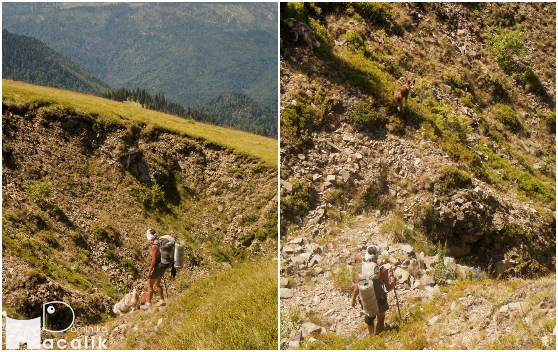 Na zdjęciu Dominika z psami pokonuje wyrwę w zboczu