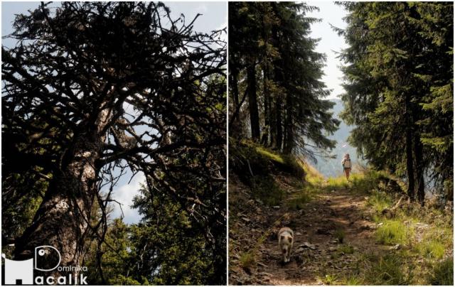 Wakacje bez wędrówki po lesie nie istnieją - Dominika z Bletką na leśnym dukcie