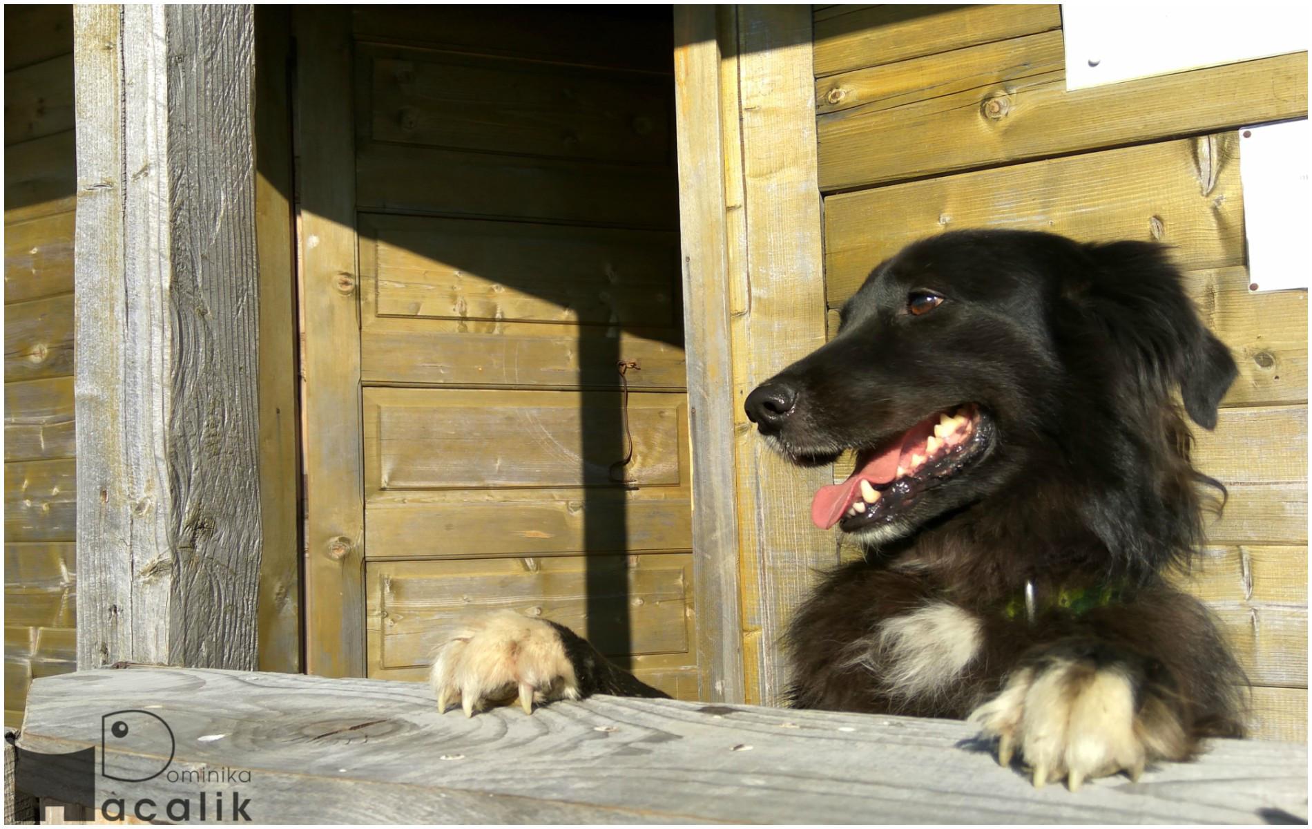 Na zdjęciu Gaja na werandzie drewnianego domku