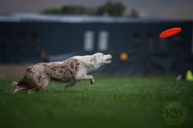Dog Games Fall Kaputy - autor - Paw Shots Photography - pawshots.pl