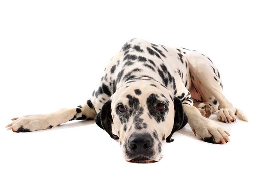 Dominika Macalik szkolenie psów