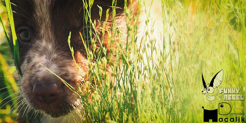 Szczeniaki… Piętnasto miesięczne ale wciąż szczeniaki